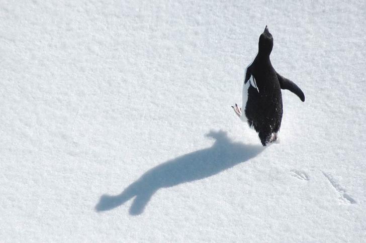 Фото №1 - На Опасных островах обнаружена крупнейшая в мире колония пингвинов