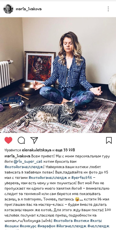 Фото №2 - Для кошек-любителей йоги стартовал #котойогачеллендж