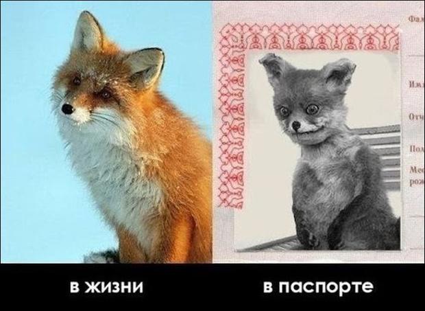 Фото №20 - 10 интернет-мемов, которые популярны только в России