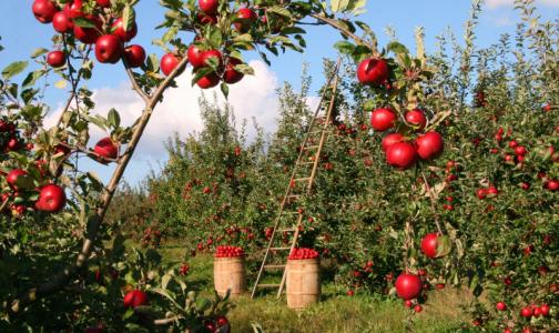 Фото №1 - Эндокринолог рассказала о связи фруктов и заболеваниях печени