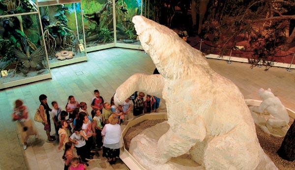 Фото №3 - Музей эволюции, или Консервация прогресса