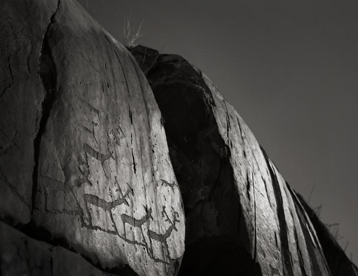Фото №5 - Фотовыставка «Взгляд грифона» в Санкт-Петербурге