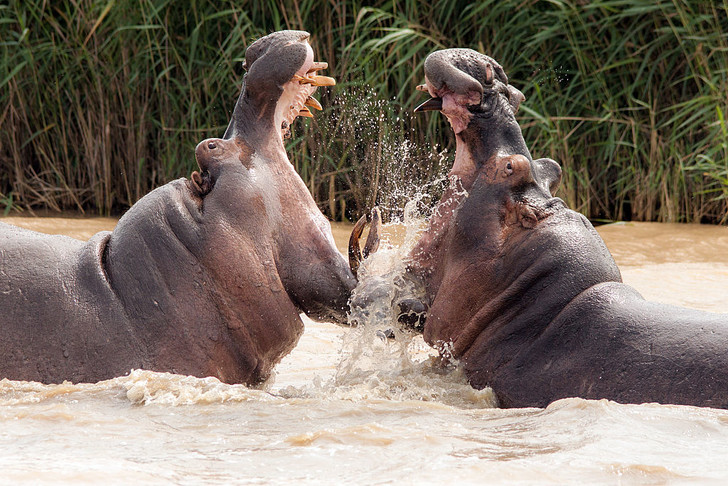 Фото №7 - Гиганты планеты: самые большие животные, которые сейчас живут на свете