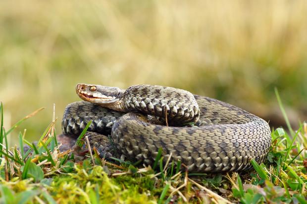 укусила змея