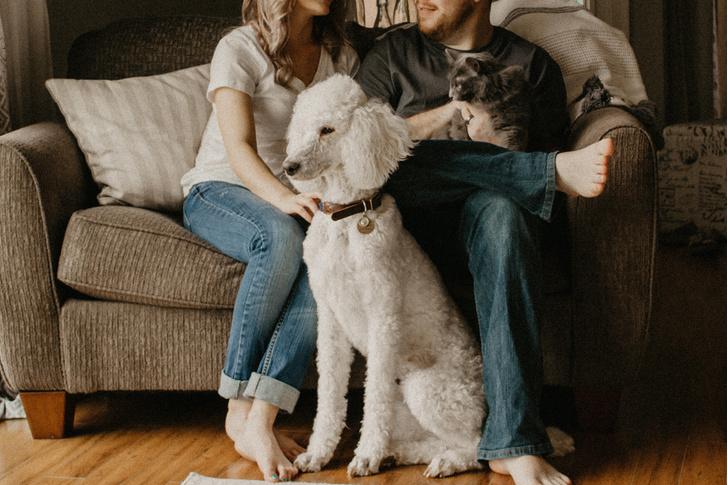 Фото №1 - Собаки и кошки лечат от стресса, доказала наука