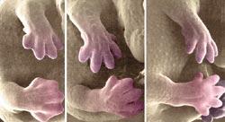 Фото №5 - Белые пятна эволюции