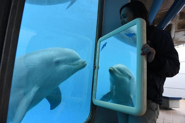 Фото №5 - Вторые после человека: 6 фактов о дельфинах