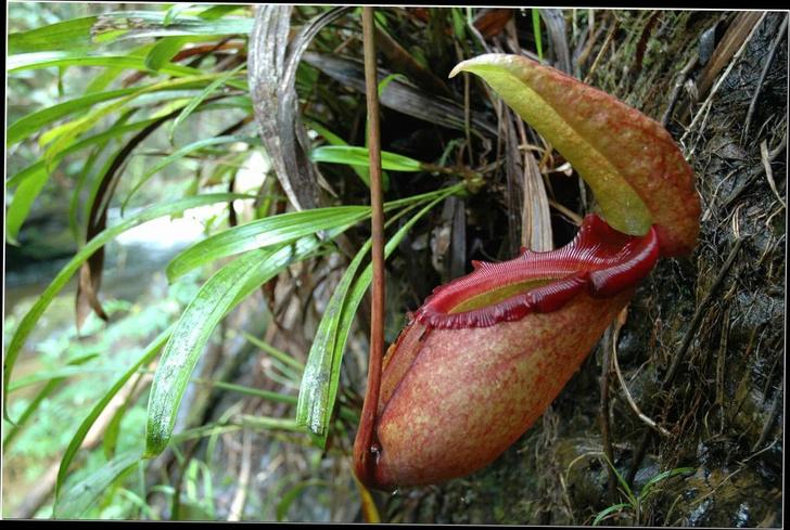 Фото №3 - 10 самых странных и страшных растений