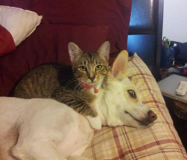 Фото №1 - Коварное злодейство котов vs наглый беспредел собак (галерея)
