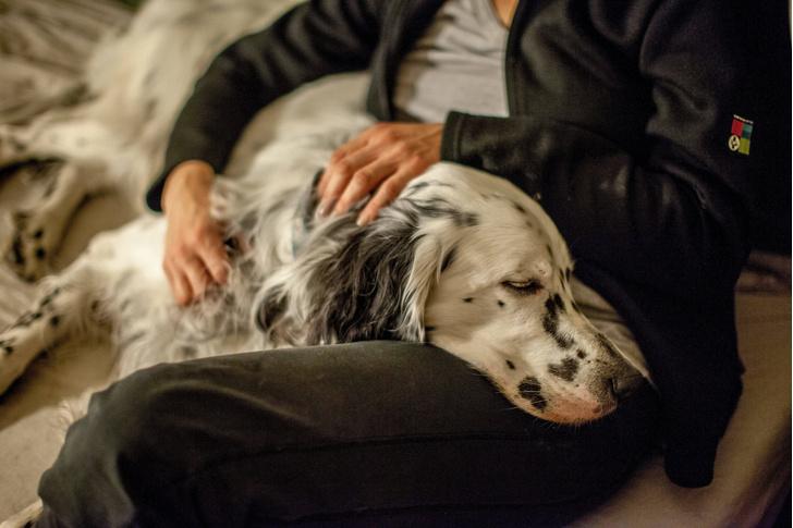 Фото №1 - Собаки могут учуять эпилептический припадок