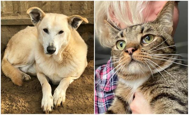 Фото №1 - Котопёс недели: кот Мур-Мурыч и собака Баушна