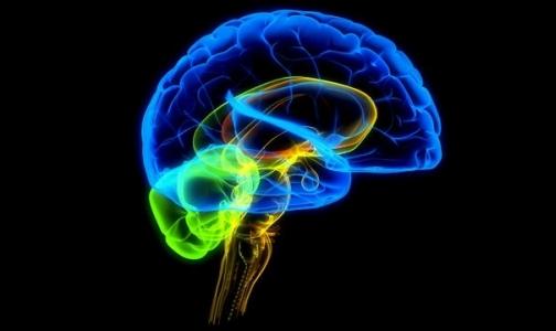 Фото №1 - Алкоголизм связан с особым строением мозга