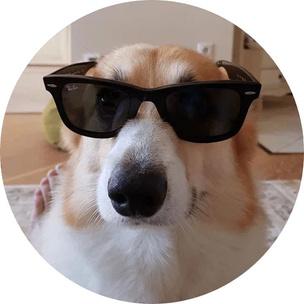 Фото №10 - Гадаем на гифках: какое смешное животное больше всего напоминает тебя сегодня