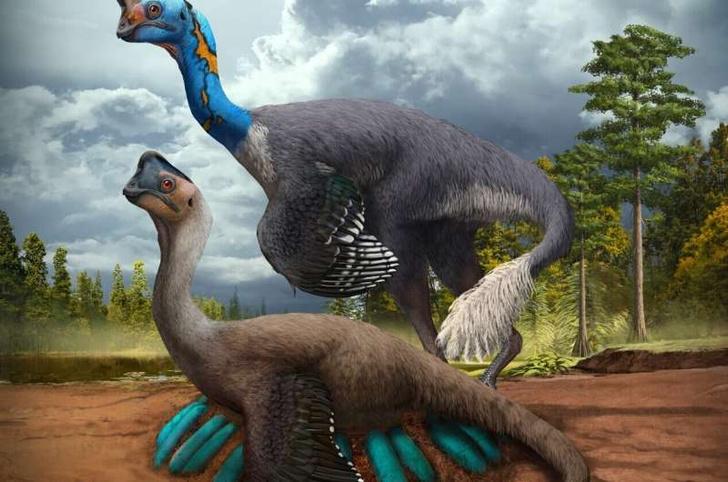Фото №1 - Обнаружены останки динозавра, сидящего на кладке яиц