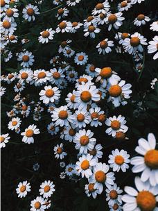 Фото №9 - Тест: Выбери цветок, и мы угадаем, какого цвета у тебя глаза