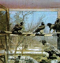 Фото №4 - Журавлиный крик над Брыкиным бором
