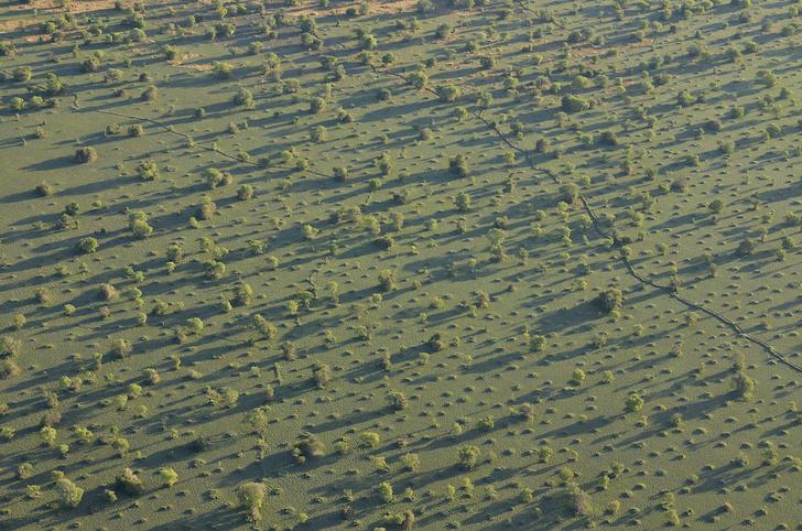 Фото №7 - Притягательная трясина: 12 самых живописных болот мира