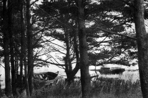 Фото №1 - Твой остров и чайки