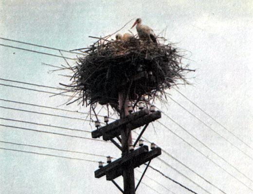 Фото №1 - За синей птицей