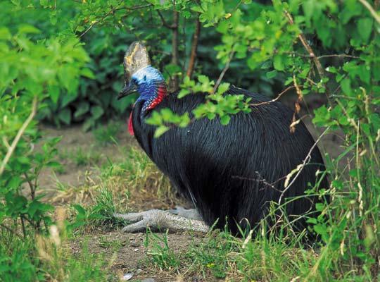 Фото №1 - Отшельник из джунглей