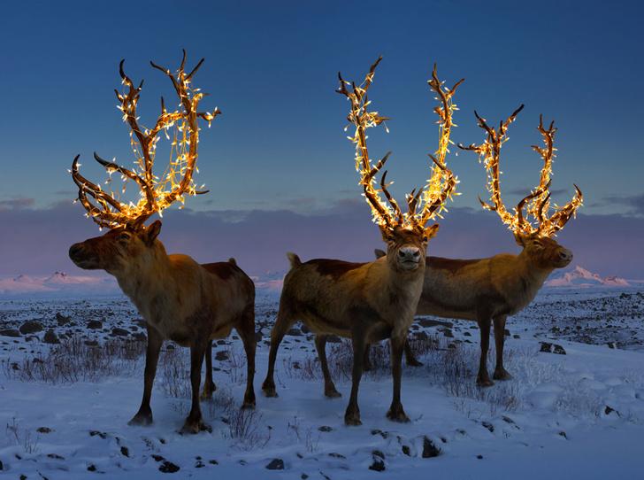 Фото №1 - Другой зимний отдых: 7 мест, куда можно отправиться этой зимой