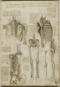 Анатомические рисунки Леонардо из Королевской коллекции появились в сети