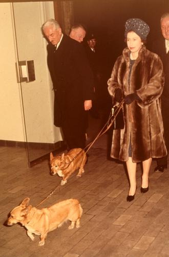 Фото №17 - Елизавета II и ее корги: история главной королевской страсти