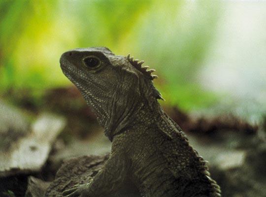 Фото №1 - Ровесница динозавров