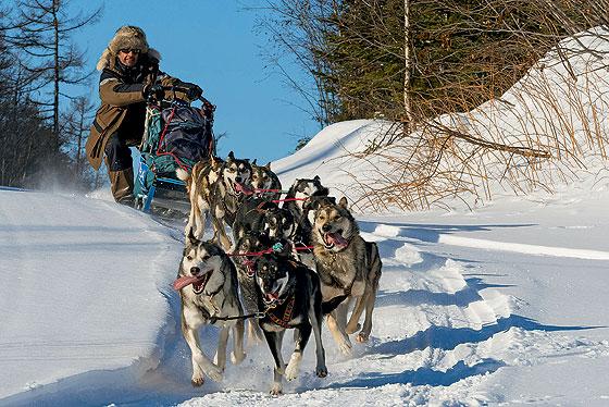 Фото №1 - Собачий холод