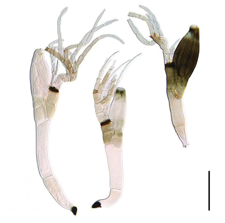 Фото №1 - Новый вид грибов назван в честь карантина