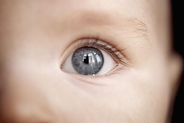 Фото №1 - Зоркий глаз