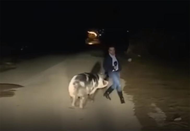 Фото №1 - На греческого журналиста в прямом эфире напала свинья (видео)