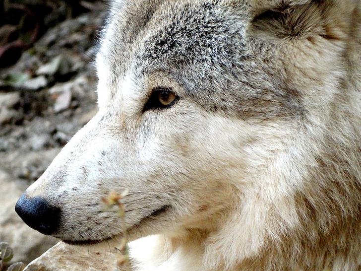 Фото №1 - Названа родина первых собак