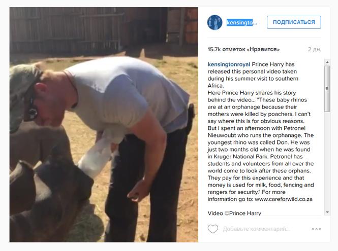Фото №2 - Принц Гарри покорил интернет трогательным видео