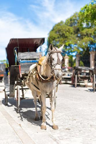 Фото №1 - Сколько лошадиных сил в одной лошади?