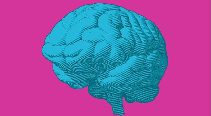 У мозга нет гендера: кто и зачем убеждает нас в обратном