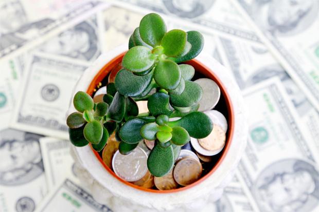 Фото №1 - Привлекаем богатство! Как сформировать денежное дерево
