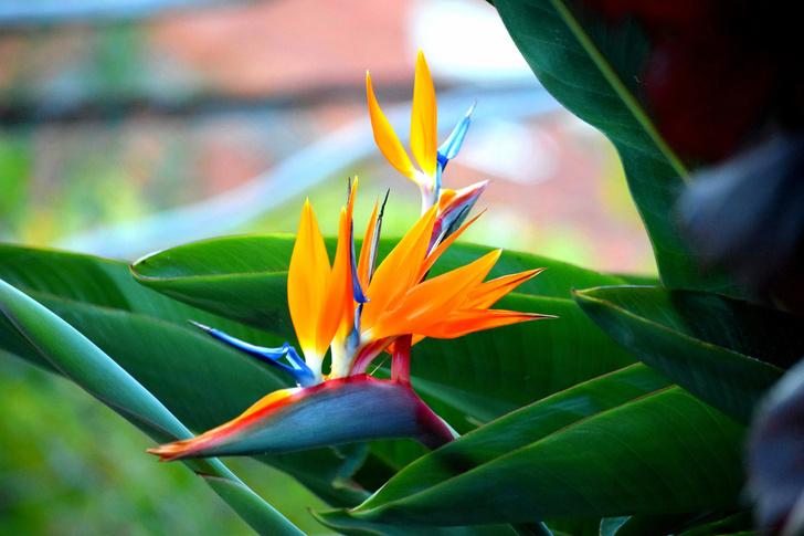Фото №11 - Комнатные растения, которые помогут пережить сезон простуд