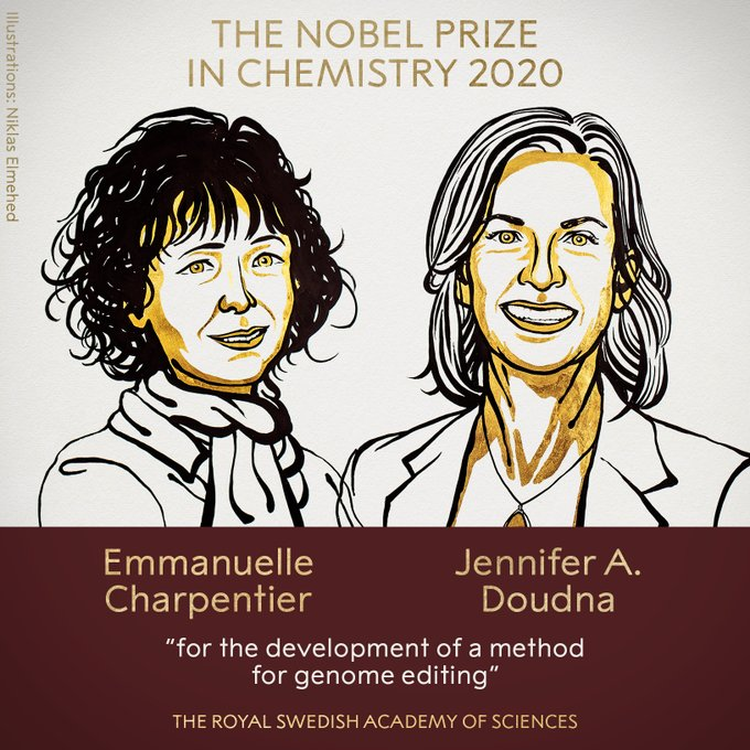 Фото №1 - Нобелевская премия по химии присуждена за метод редактирования генома