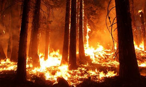 Фото №1 - Ученые: Прошлогодние лесные пожары способствуют распространению эпидемии коронавируса