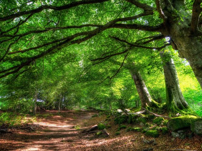 Фото №6 - Кто такие друиды и какое вы дерево