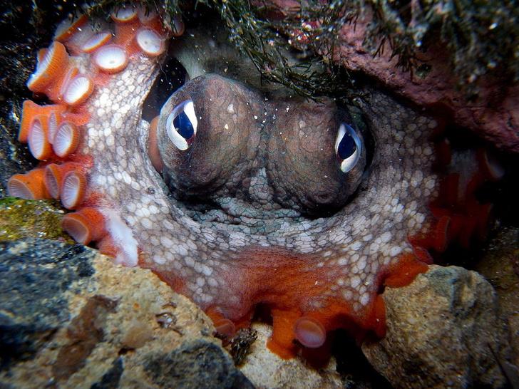 Фото №1 - Обнаружен «город осьминогов»