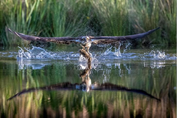 Фото №1 - Охота