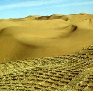 Фото №1 - Пустыня — новая угроза Земли