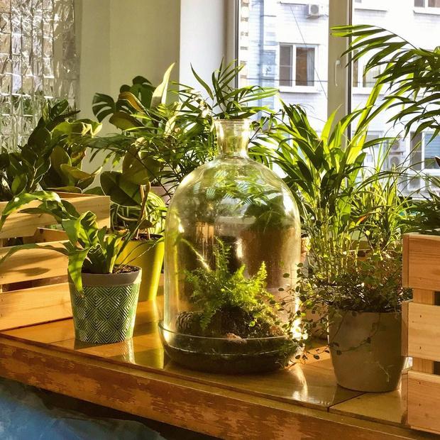 Фото №1 - С чего начать озеленение квартиры: советы эксперта
