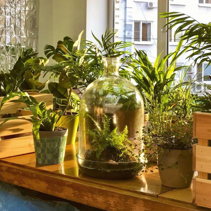 Фото №1 - Все, что нужно знать о пересадке комнатных растений