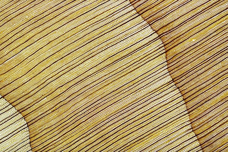 Фото №1 - Суть вещей: священная древесина