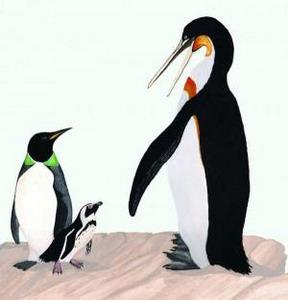 Фото №1 - Древние пингвины жили в тропиках