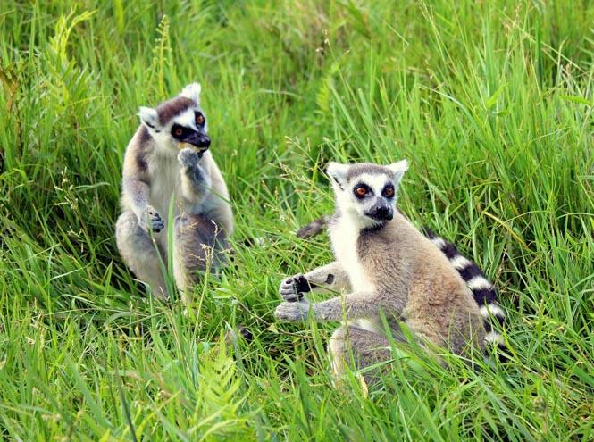 Фото №6 - В пути: что привезти с Мадагаскара