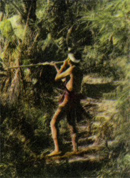 Фото №6 - В лесах Борнео